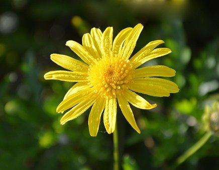 Flower, Yellow Flower, Yellow Flowers, Petals, Nature