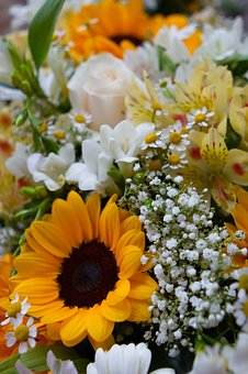 Sunflower, Flowers, Nature, Yellow, Summer, Floral