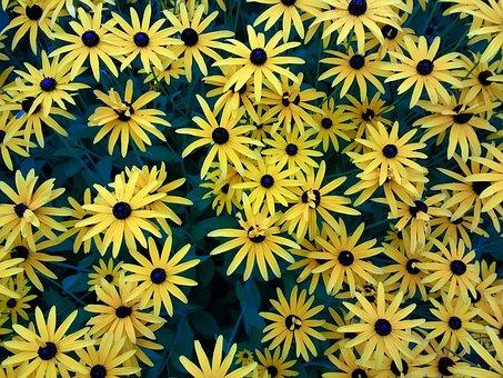 Flowers, Yellow, Plant, P, Nature, Yellow Flower