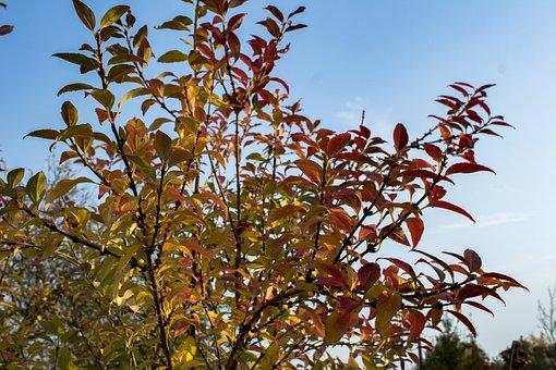 Autumn, Foliage, Yellow Leaves, Autumn Gold, Colors
