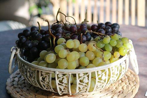 Grape, Fruit, Nature, Vine, Fall, Black Grape