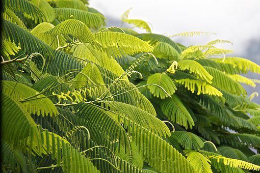 Green, Photosynthesis, Leaves, Tree, Leaf