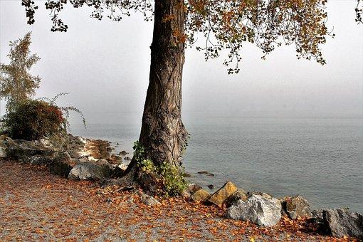 Morning, Tree, Autumn, Haze, Lake, Light