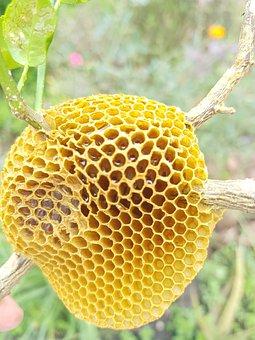 Bee, Honey, Yellow