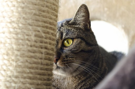 Cat, Cat Eyes, Domestic Cat, Cat's Eyes, Kitten, Look