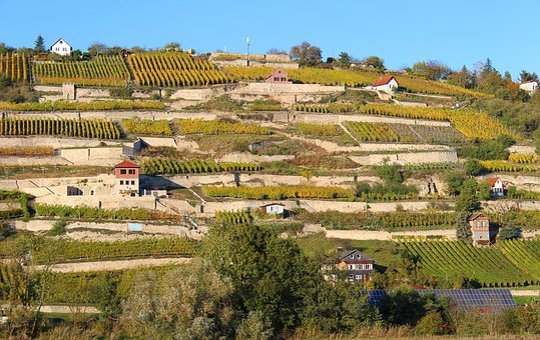 Saale Unstrut, Vineyards, Wine, Landscape