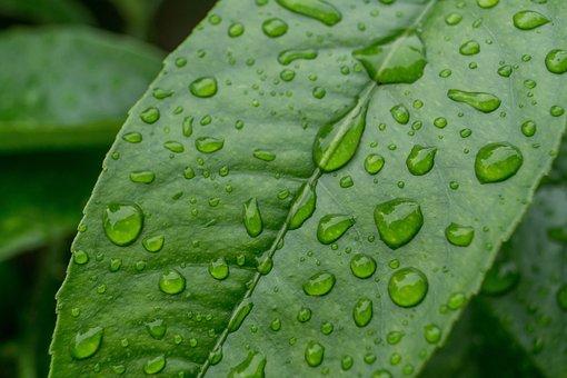 Drip, Rain, Leaf, Drops Of Water, Drops Of Rain, Plant