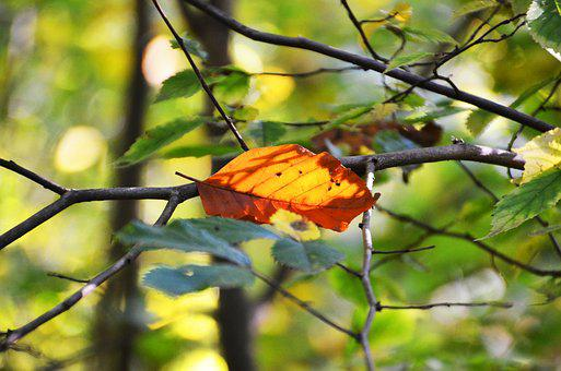 Autumn, Leaf, Leaves, Branches, Fall Foliage