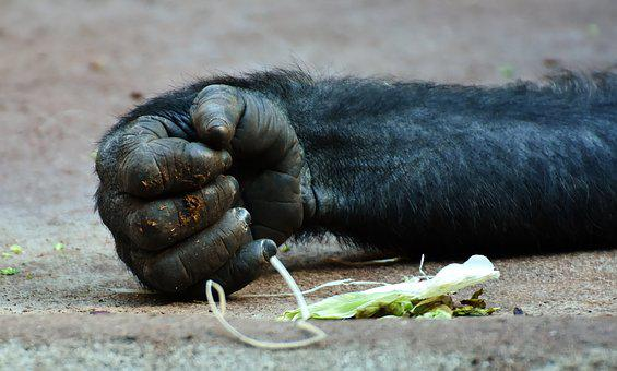 Gorilla, Monkey, Hand, Food, Animal World, Animal