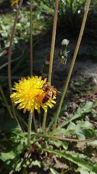 Grass, Prato, Green, Seeds, Spring, Flowers, Nature