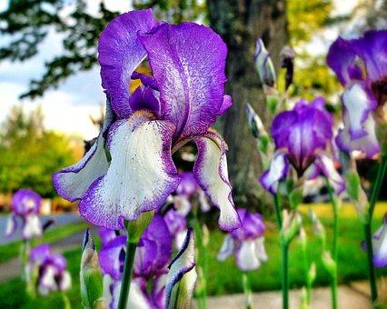 Flowers, Purple, White, Green, Purple Flower, Nature