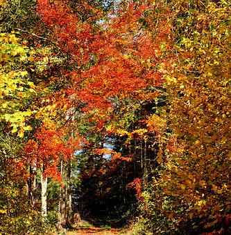 Forest, Autumn Forest, Trees, Deciduous Trees