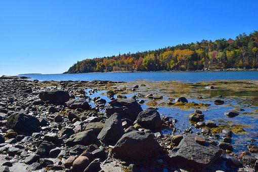Shore, Trees, Rocks, Ocean, Pine Trees, Maine, Nature