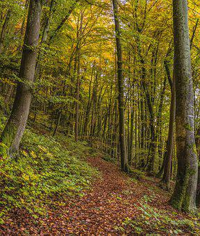 Trail, Forest, Trees, Autumn, Nature, Beautiful, Idyll