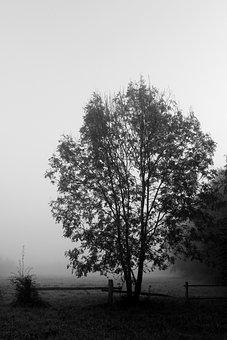 Tree, Fog, Black White, Landscape, Autumn, Atmosphere