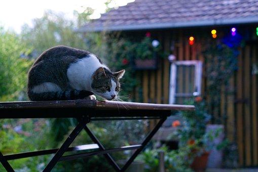 Cat, Out, Domestic Cat, Curious, Nature, Autumn