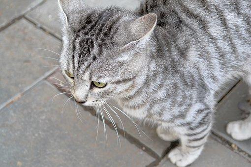 Cats, Animals, Cat, Handsome Man, Beasts, Cute, Pets