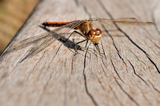 Dragonfly, Close, Insect, Red Dragonfly, Nature, Wing