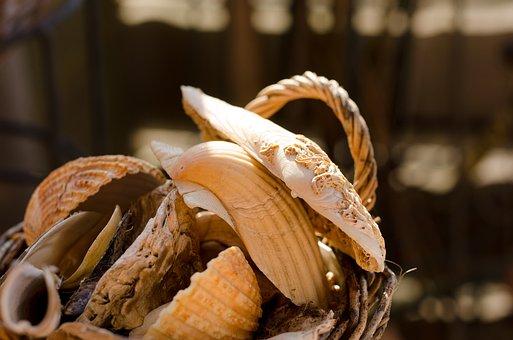 Mussels, Basket, Still Life, Autumn, Close, Nature