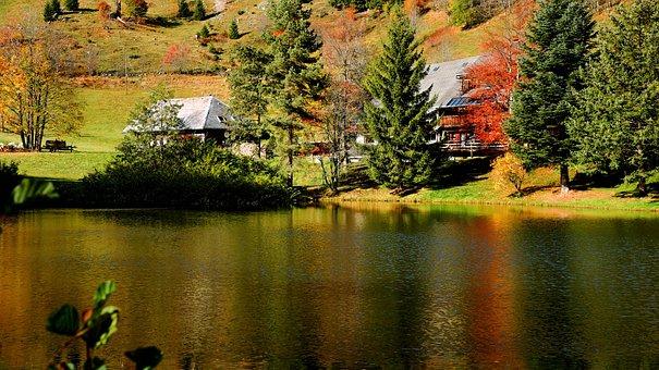 Black Forest, Dobelsee, Lake, Water, Reflection