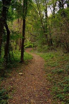 Forest, Trail, E5, European, Val Borago, Mountain