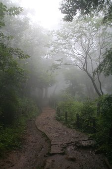 Fog, Forest, Enchanted Forest, Path