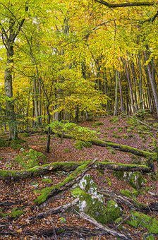 Forest, Idyll, Beautiful, Nature, Autumn, Idyllic