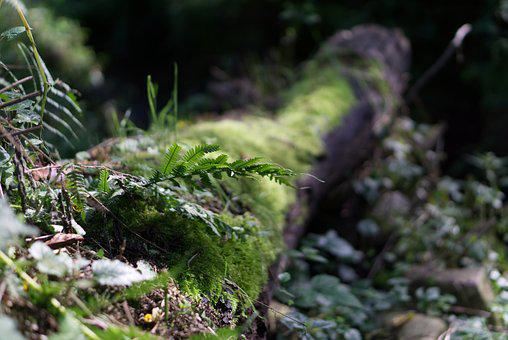 Fern, Grass, In The Green, Mood, Strains