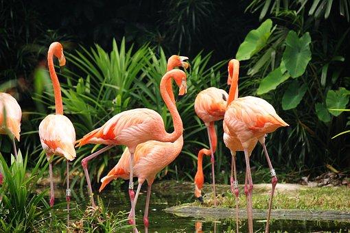 Wildlife, Animal, Nature, Flamingo, Grass, Zoo, Lake
