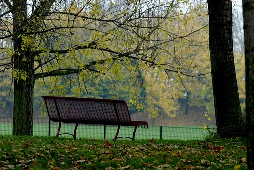 Park, Tree, Fall, Yellow, Leaf, Bench