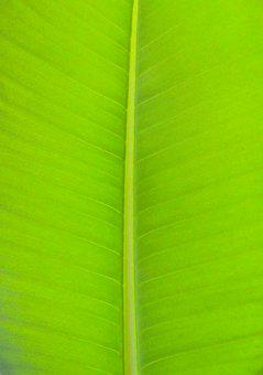 Light, The Leaves, Leaf, Nature, Plants, Green, Herb