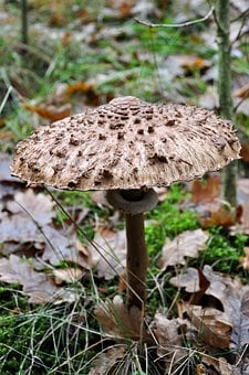 Mushroom, Forest, Nature, Autumn, Toxic
