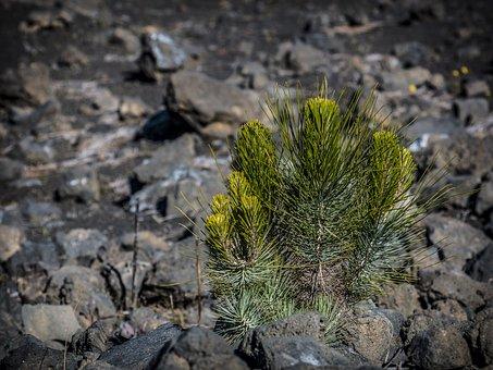Nature, Smaller Tree, Tree, Volcano, National Park