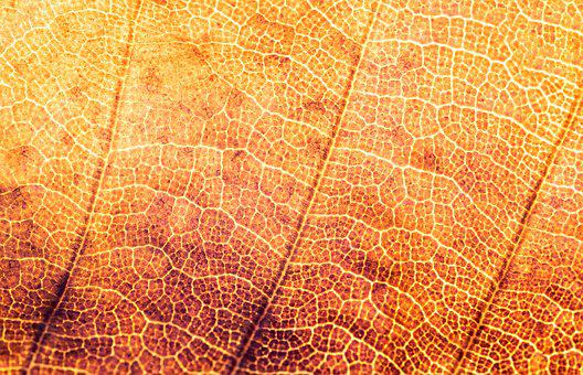 Texture, Structure, Leaf, Pattern, Structures