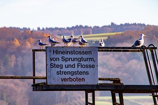 Sign, Sprungturm, Gulls, Ban, Birds