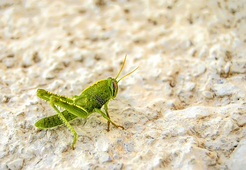 Nature, Macro, Animal, Insect, Invertebrate, Small
