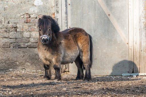 Horse, Small Horse, Pony, Animal, Cute, Mane, Small
