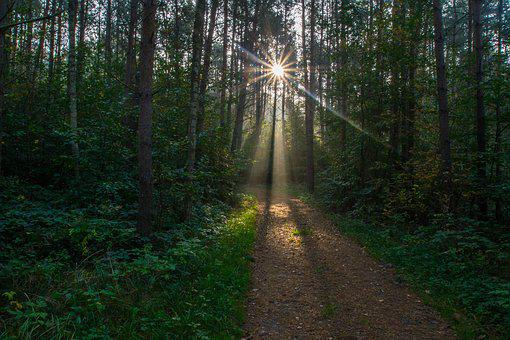 Sonnenstern, Sunbeam, Forest Path, Trees, Fall Foliage