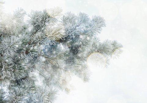 Texture, Background, Tannenzweig, Snow, Winter