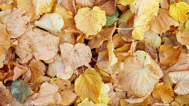 Texture, Background, Fall Foliage, Autumn, Leaves