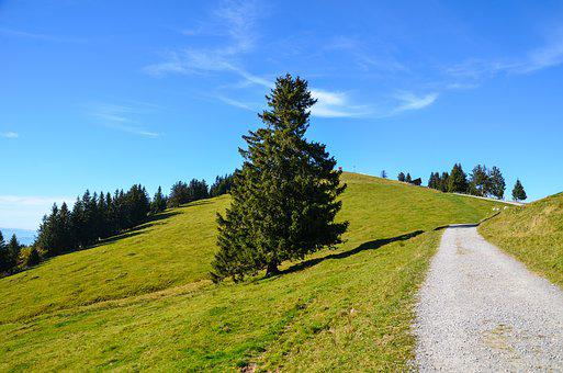 Alpine, Rigi, Trail, Hiking, Holiday, Holidays, Nature