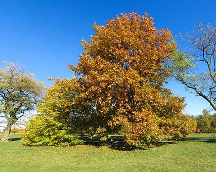 Nature, Tree, Autumn, Leaves, Fall Foliage, Yellow