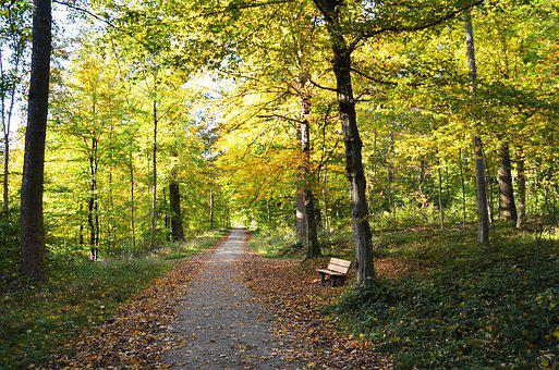 Autumn, Away, Forest, Bench, Nature, Rest, Trees