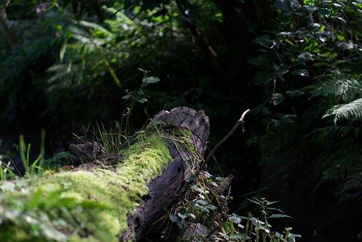 Log, Bach, Green, Moss, Wood, Waters, Water Running