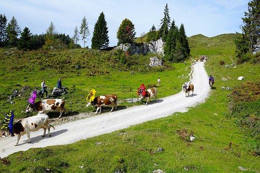 Alm, Austria, Wilder, Emperor, Mountain, Hill, Away