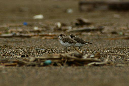 Animal, Sea, Beach, Wild Birds, Little Bird