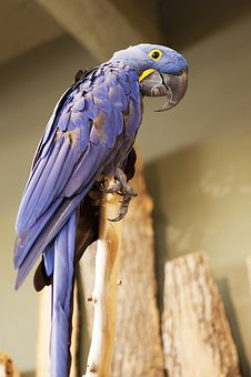Parrot, Bird Kingdom, Bird