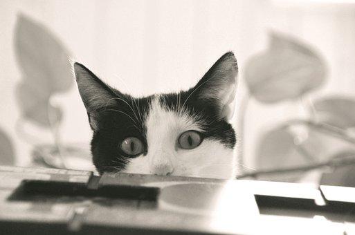 Cat, Domestic Cat, Kitten, Young Cat, Mieze, Animal
