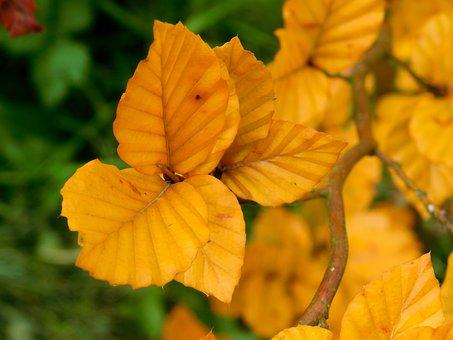Leaf, Leaves, Autumn Leaves, Orange Leaves, Fall Leaves