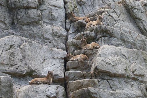 Group, Animals, Animal World, Creature, Synchronous